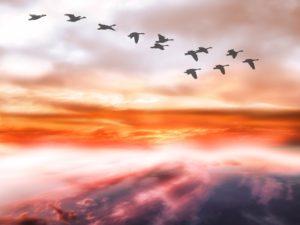 sky-geese
